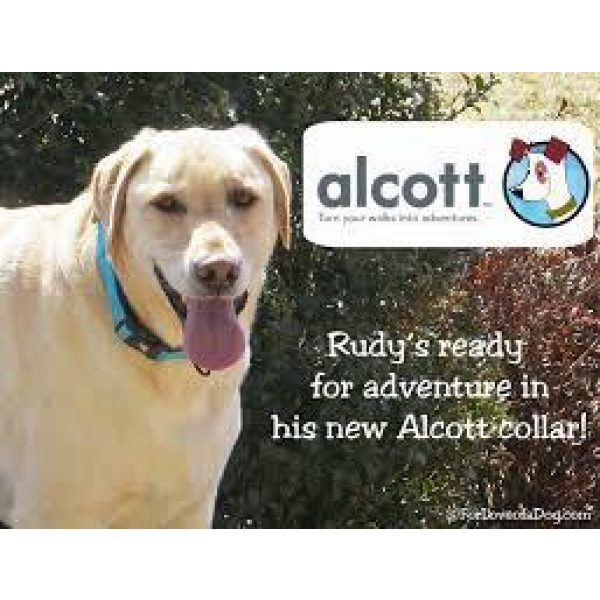 Alcott Collar Blue - Collars - Xtra Dog