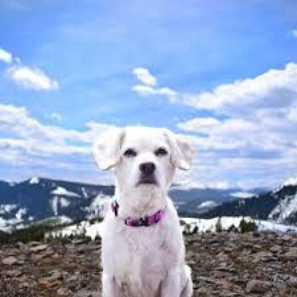 Alcott Collar Pink - Collars - Xtra Dog