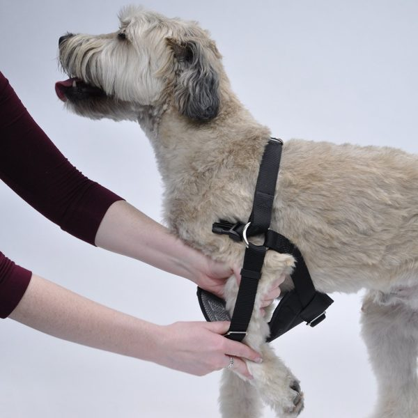 Crash-Tested Easy Rider Car Harness by Coastal Pet Products - Harnesses - Xtra Dog