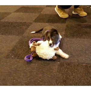 goDog FuzzyWuzzy Lamb with Chew Guard Technology (Small)