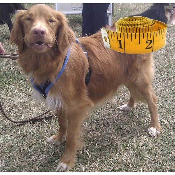 Small Custom Fit Walking Harness Fleece or Foam - Harnesses - Xtra Dog