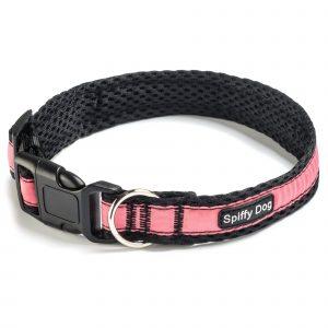 Spiffy Dog, Black Pink Collar
