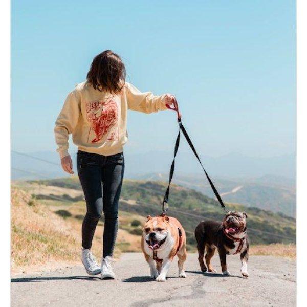 Spiffy Dog Let 'Em Lead - Leads - Xtra Dog