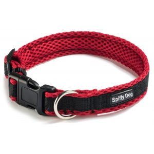 Spiffy Dog, Red Black Collar