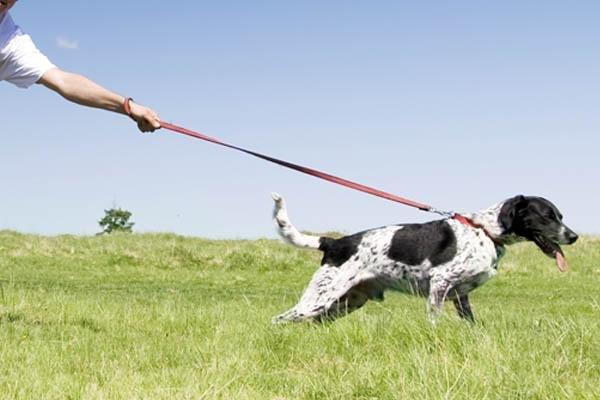 Stop Dogs Pulling on the Lead