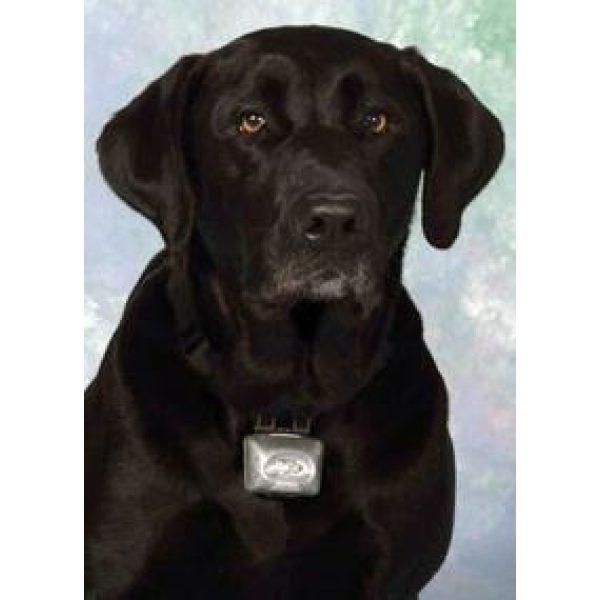 The PupLight 2 Black - Collar Light - Xtra Dog