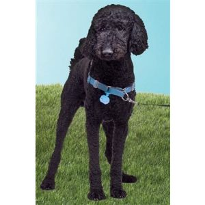 Twigo Pet ID silencer blue