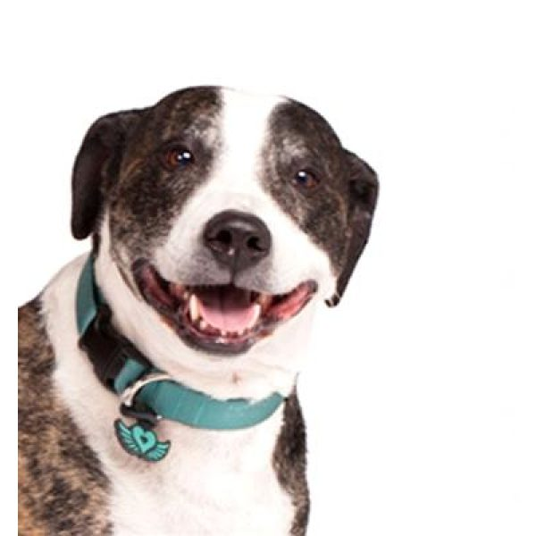 Twigo Pet ID tag -Free Spirit Teal - Pet Tag - Xtra Dog