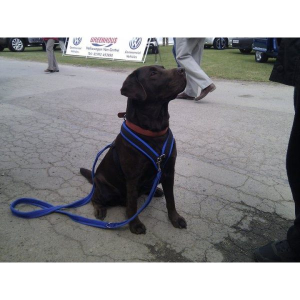 Xtra Dog Water-Repelling Walking Harness - Harnesses - Xtra Dog