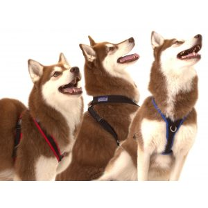 Xtra Dog Water-Repelling Walking Harness