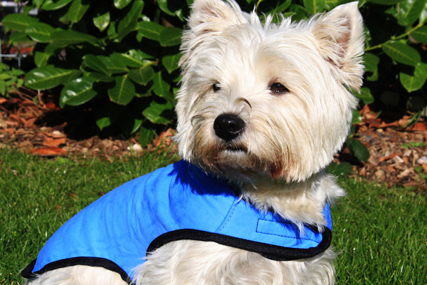 Xtra Dog: Soft, Fleece Dog Harnesses, Spiffy Dog Collars, Dexas Bowls   Ethical Products for Dogs